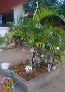 vánoční palma v Brazílii